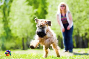 dog on lawn